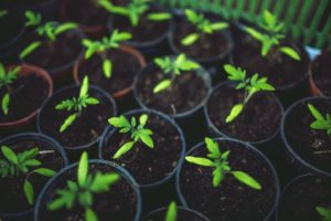 Jardins communautaires et/ou collectifs